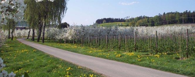 Auf dem Weg zu Ferien auf dem Bauernhof in Friedrichshafen am Bodensee